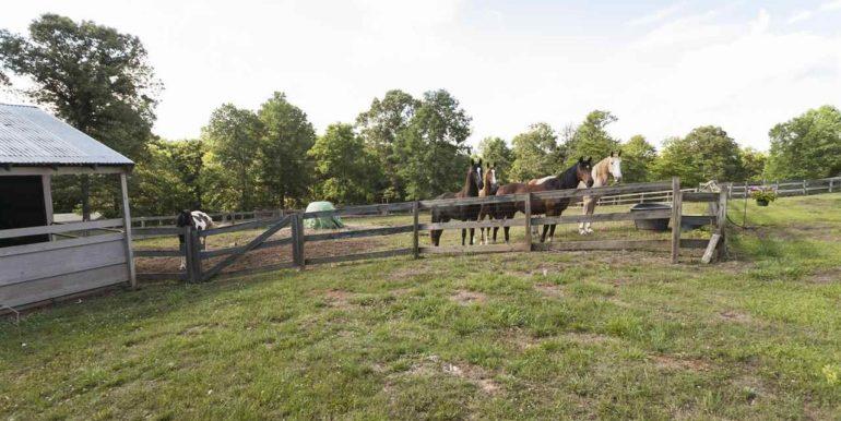 Pasture - horses